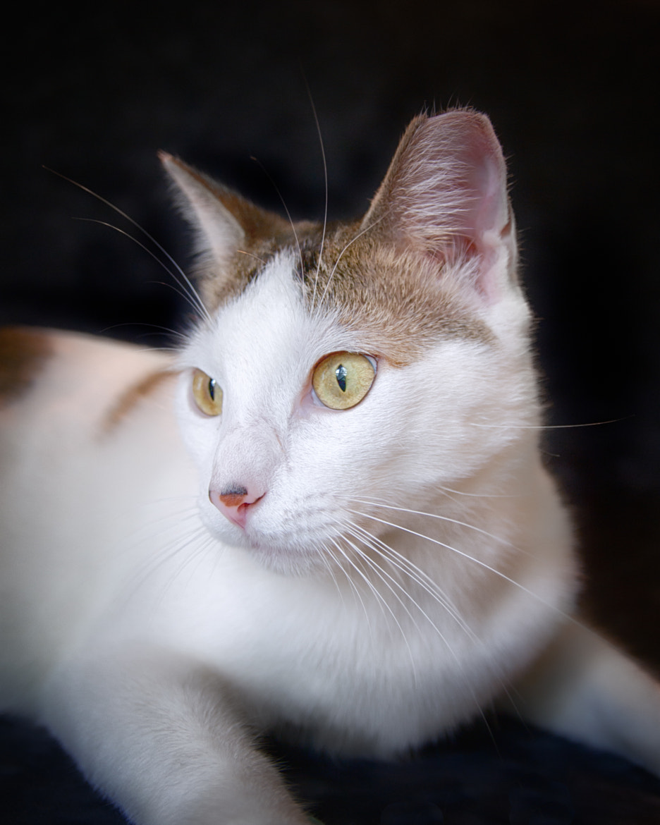 Photograph Rescue Cat by DogStarPics Lanier on 500px
