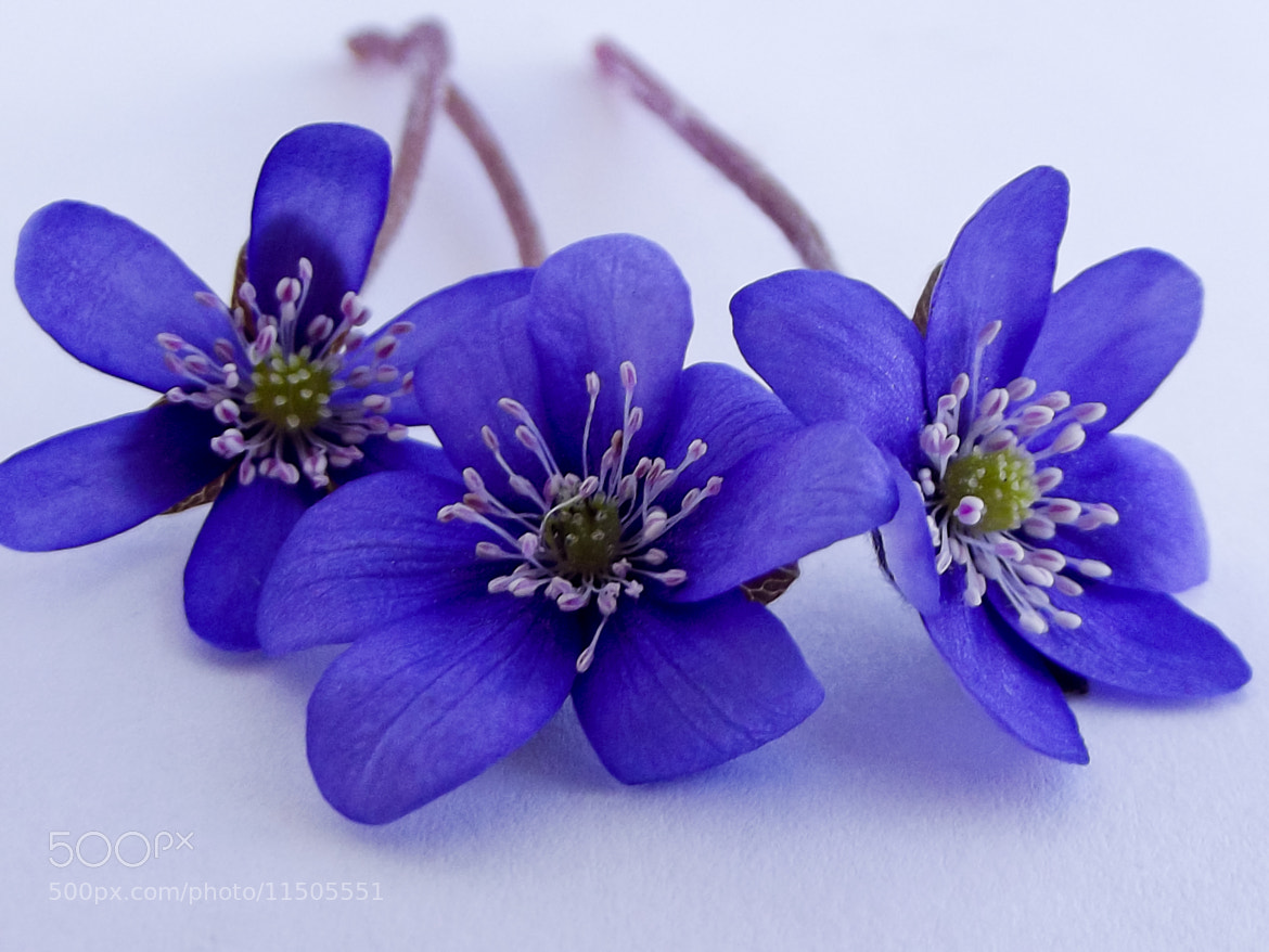 Photograph Violet by Vilma Dudu on 500px