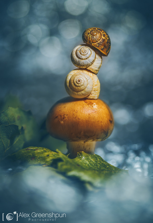 The Garden Gnome by Alex Greenshpun on 500px.com