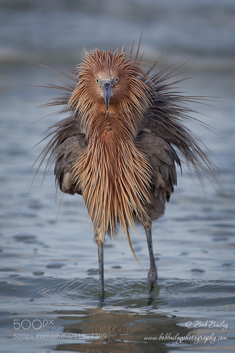 Photograph Another Bad Hair Day by Bob Bailey on 500px
