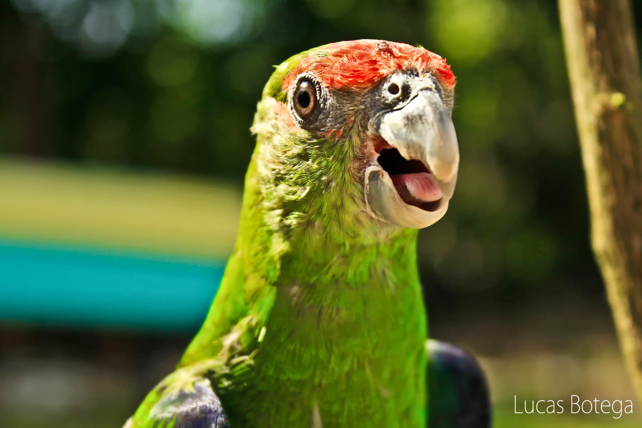 Photograph Parrot by Lucas Botega on 500px