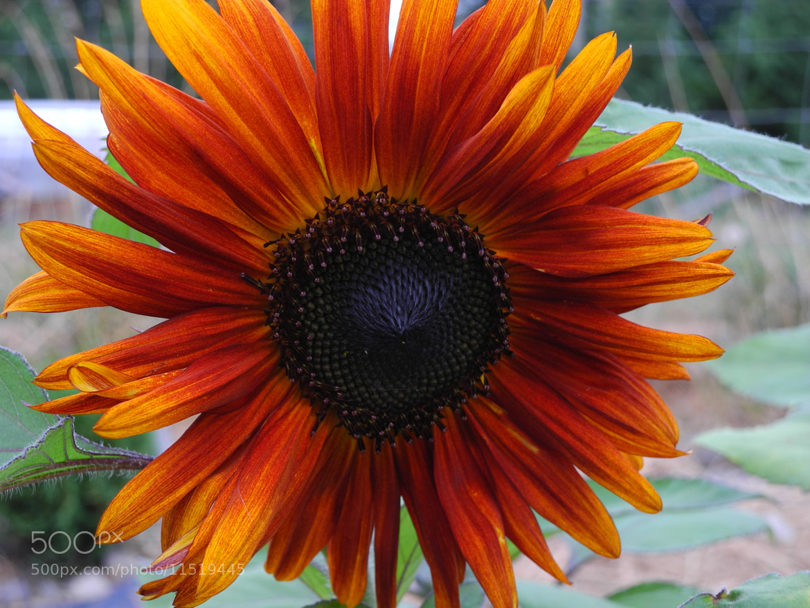 Photograph Orange  by Kerry Nobbs on 500px