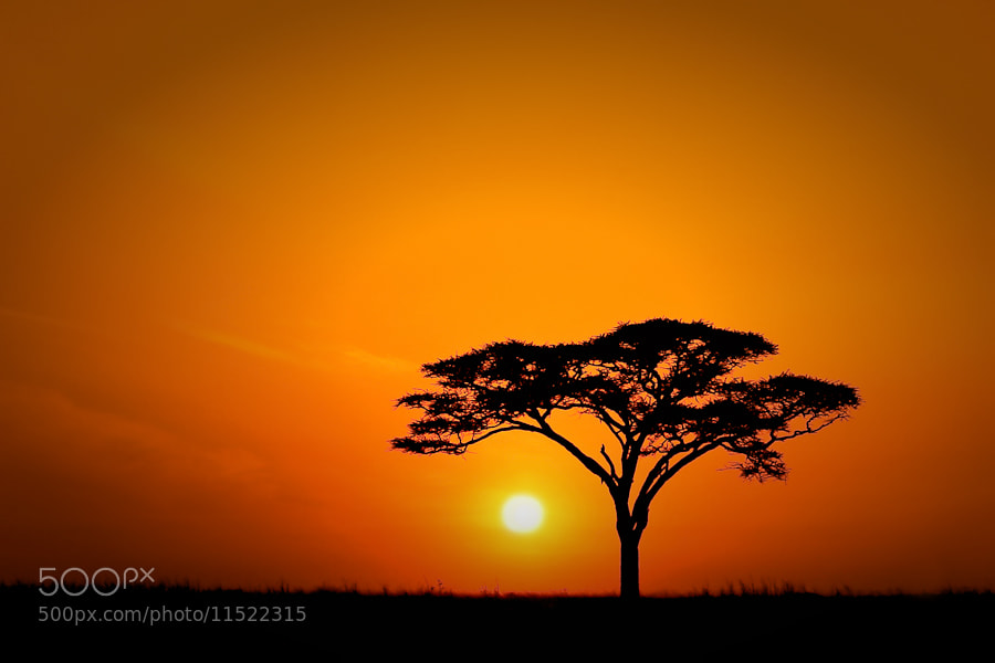Photograph The Serengeti by Mario Moreno on 500px