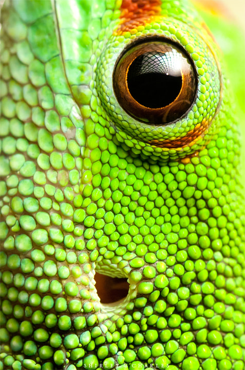 Photograph green monster by shirley and charles on 500px