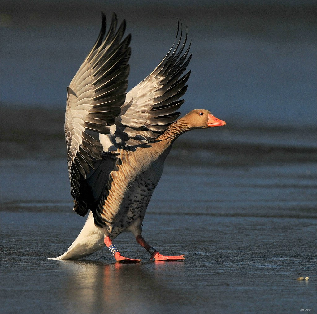 Photograph Landing on Ice by Elmar Weiss on 500px