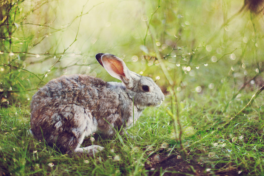 Photograph Hare in the Rose Garden by Kristina Makeeva on 500px