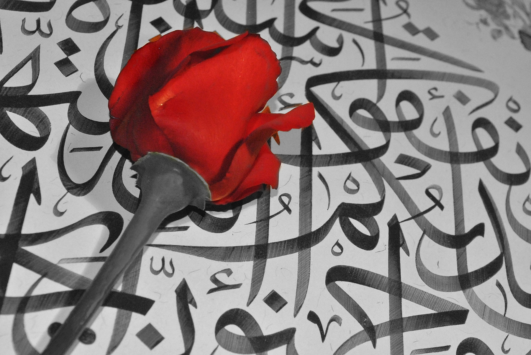 Photograph Rose and Calligraphy by Ayhan ÇAKAR on 500px