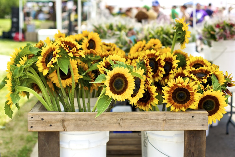 Photograph Sunflowers in Logan Square by Dane Deasy on 500px