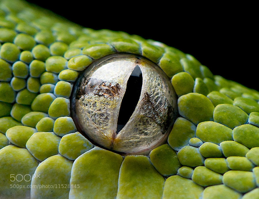 Photograph Eye of the GTP by Henrik Vind on 500px
