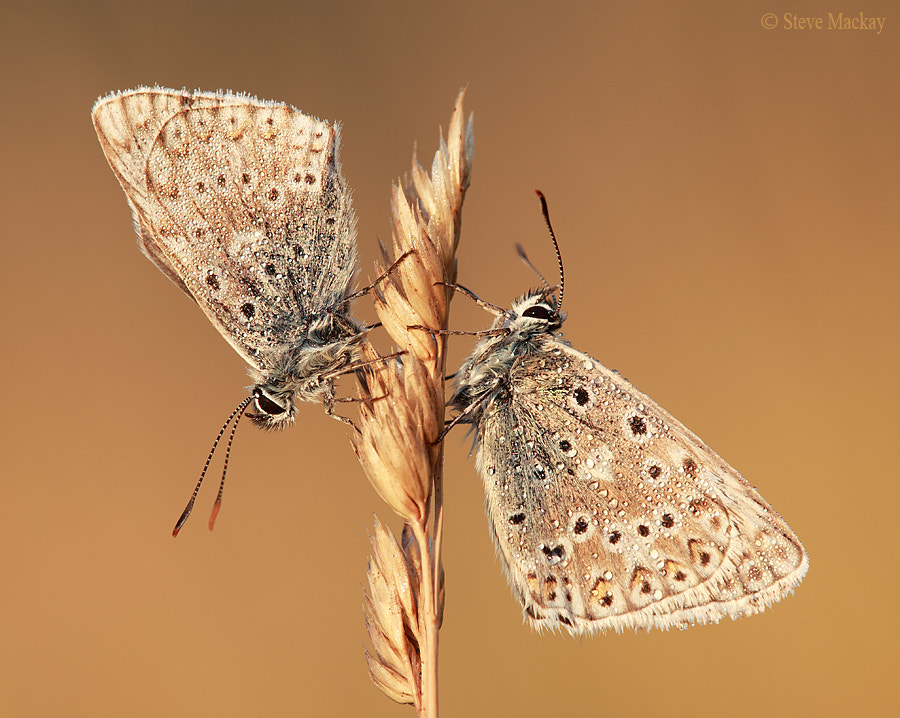 Photograph Top and Tail by Steve Mackay on 500px