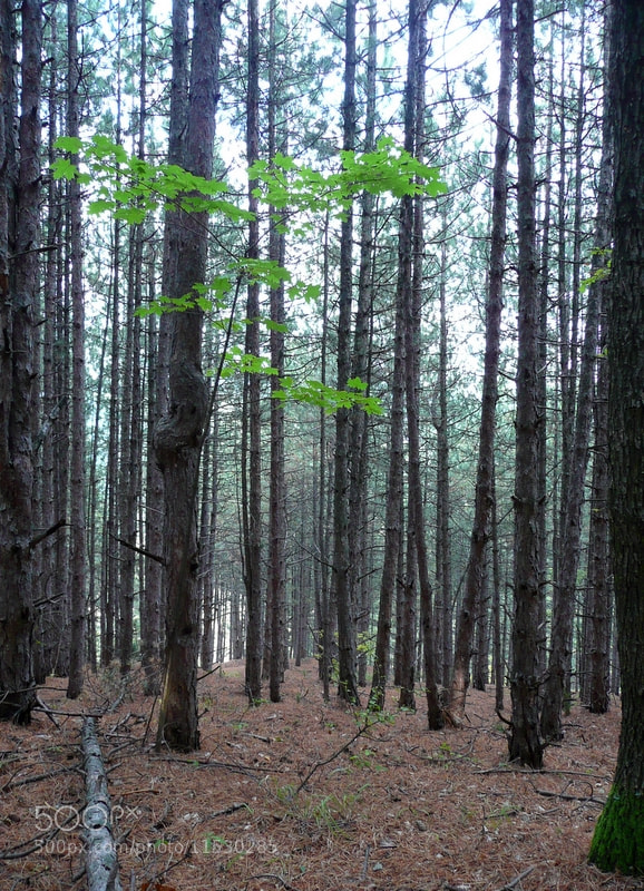 Photograph Forest by Martin Zeinelov on 500px