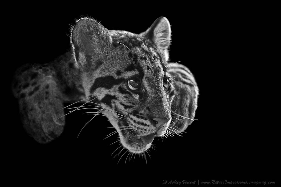Photograph Panting Beauty by Ashley Vincent on 500px