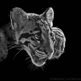 Panting Beauty by Ashley Vincent (ashleyvincent)) on 500px.com