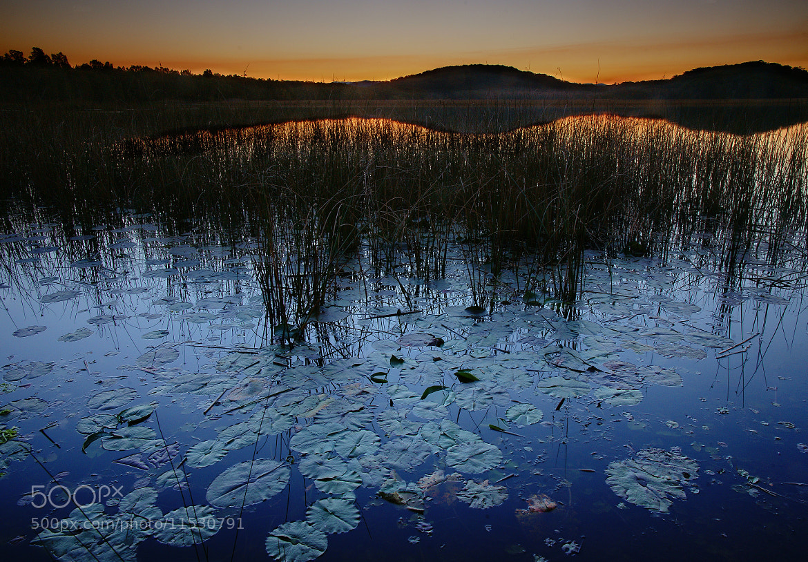 Photograph floating leaves at sunset by Johan H Naess on 500px