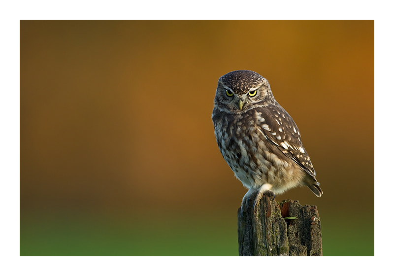Photograph Attitude by Jules Cox on 500px