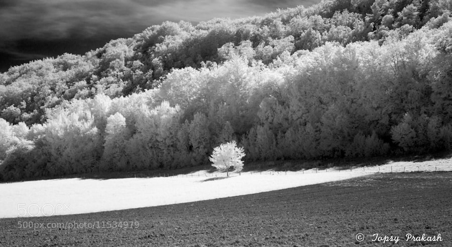 Photograph infrared landscape II by prakash topsy on 500px