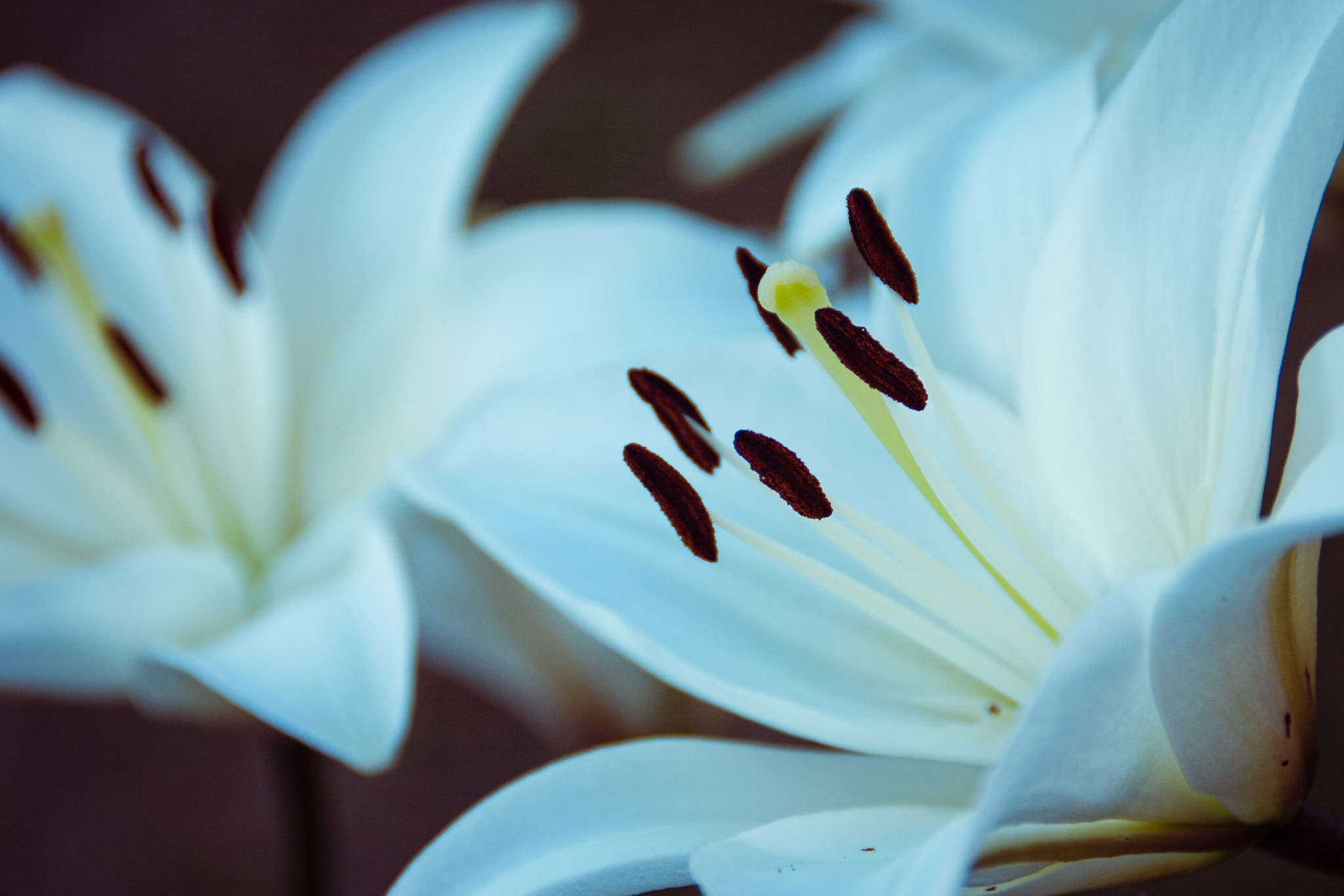 Photograph Lilies by David Asch on 500px