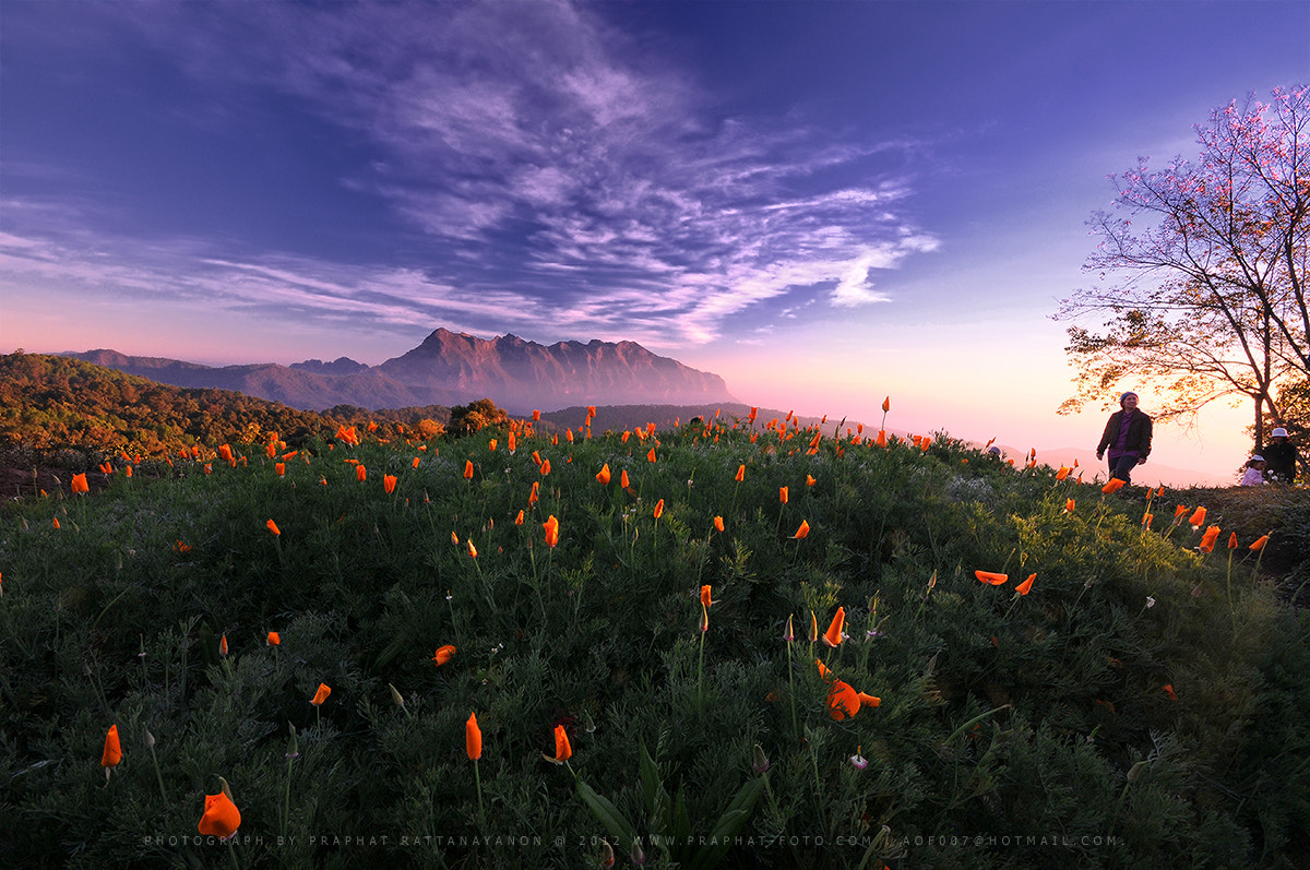Photograph Mae Taman Mountain. by Praphat Rattanayanon on 500px