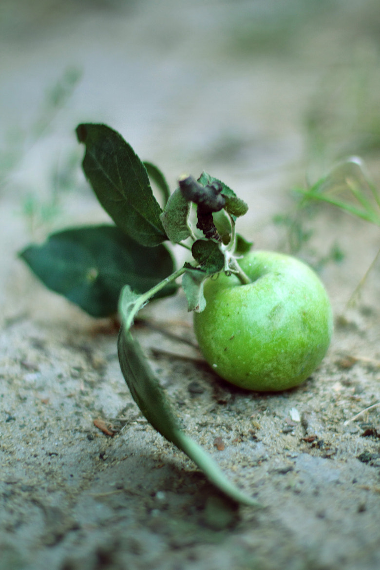 Photograph Green Apple by Maria Duka on 500px
