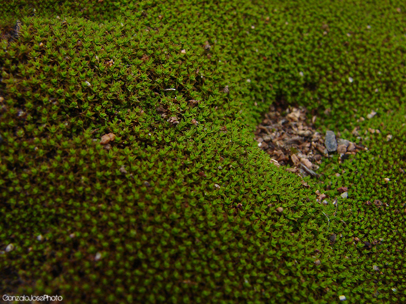 Photograph Verde by Gonzalo Jose Palermo on 500px
