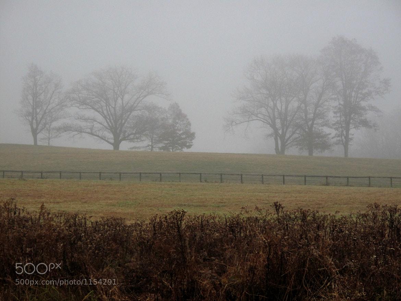 Photograph Foggy Morn by JC Shamrock on 500px