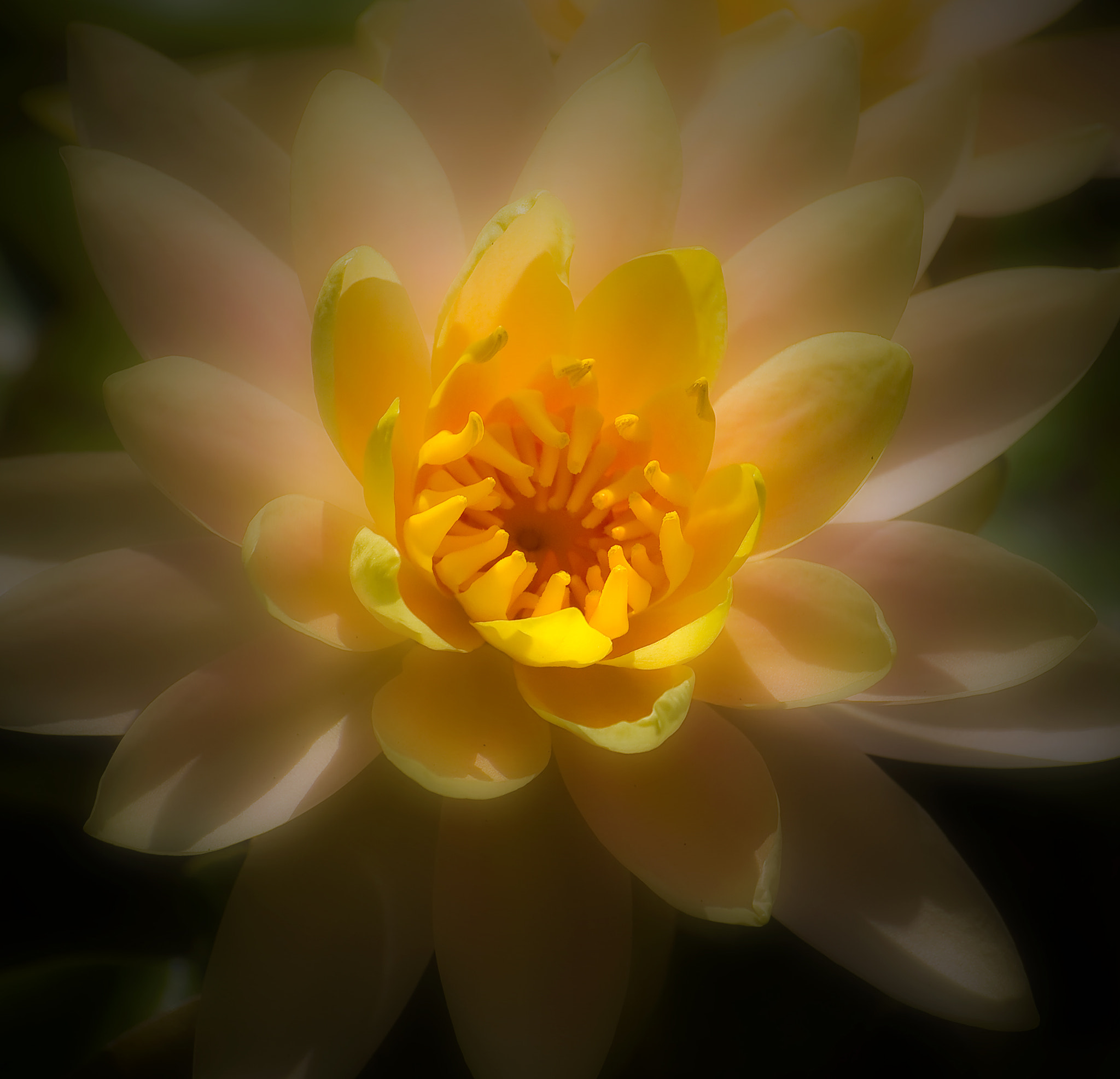 Photograph Water Lily by Kevin Pepper on 500px