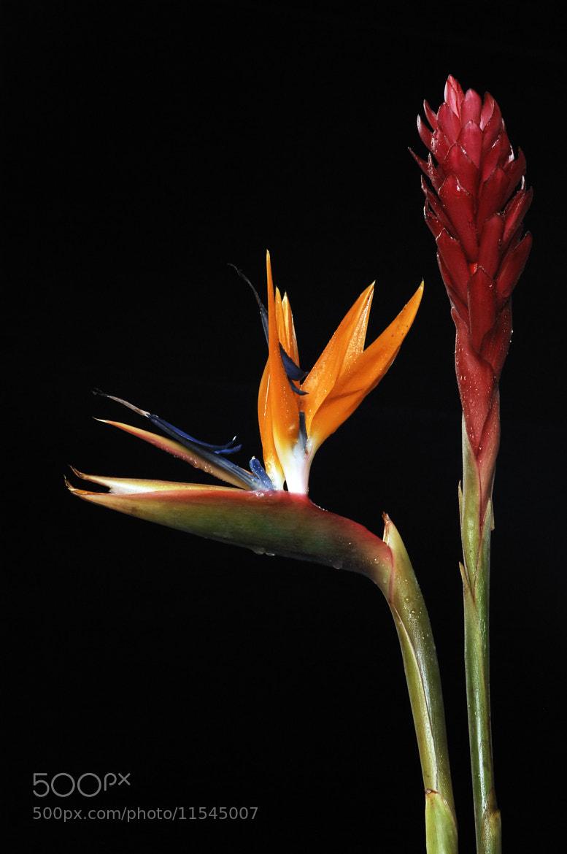 Photograph Paradise Flowers by Cristobal Garciaferro Rubio on 500px