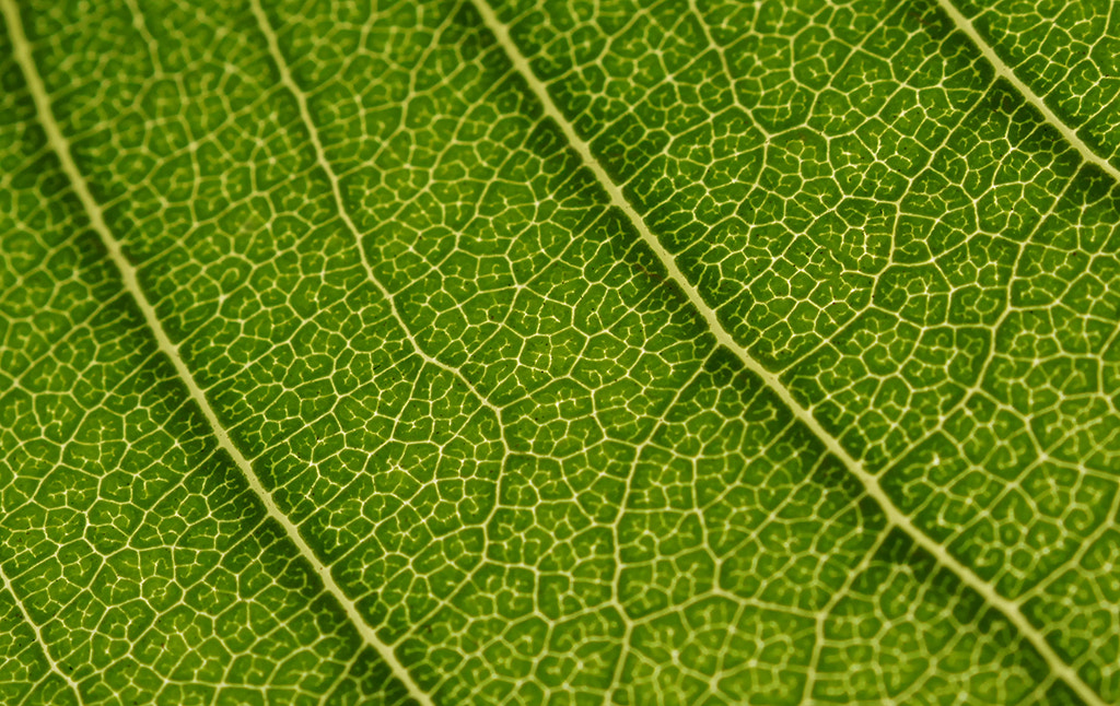 Photograph Leaf Texture by ---ROB---  PHOTOGRAPHY on 500px