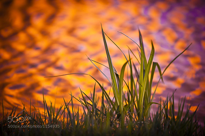 Photograph Pond Grass by Tom Patrick on 500px