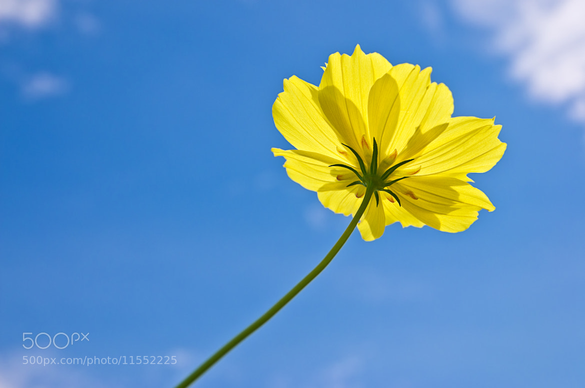 Photograph Be Bright by Krissana Amorn on 500px
