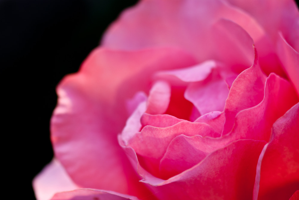 Photograph some reds by Michael Spahn on 500px