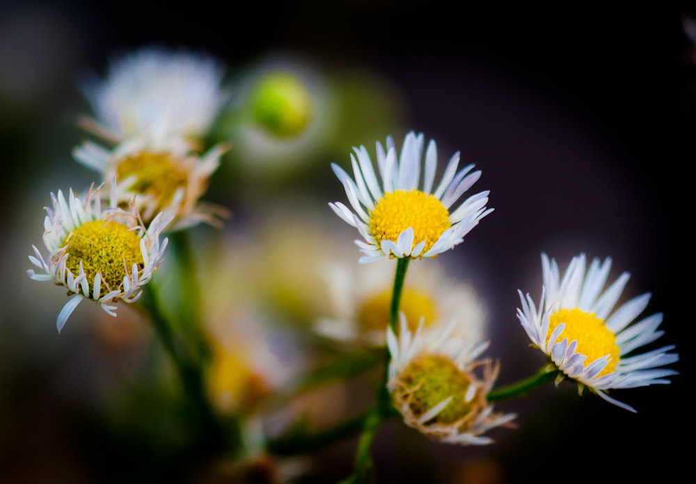 Photograph Glow by Michael Spahn on 500px