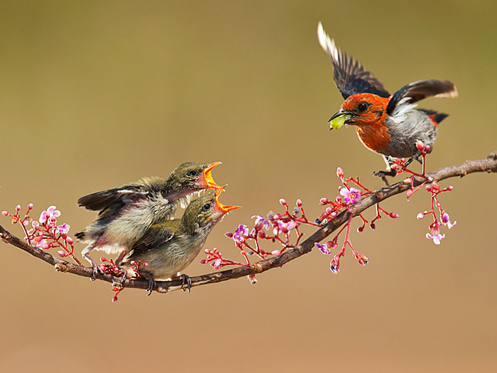 Photograph I'm Hungry by Iwan Tirtha on 500px