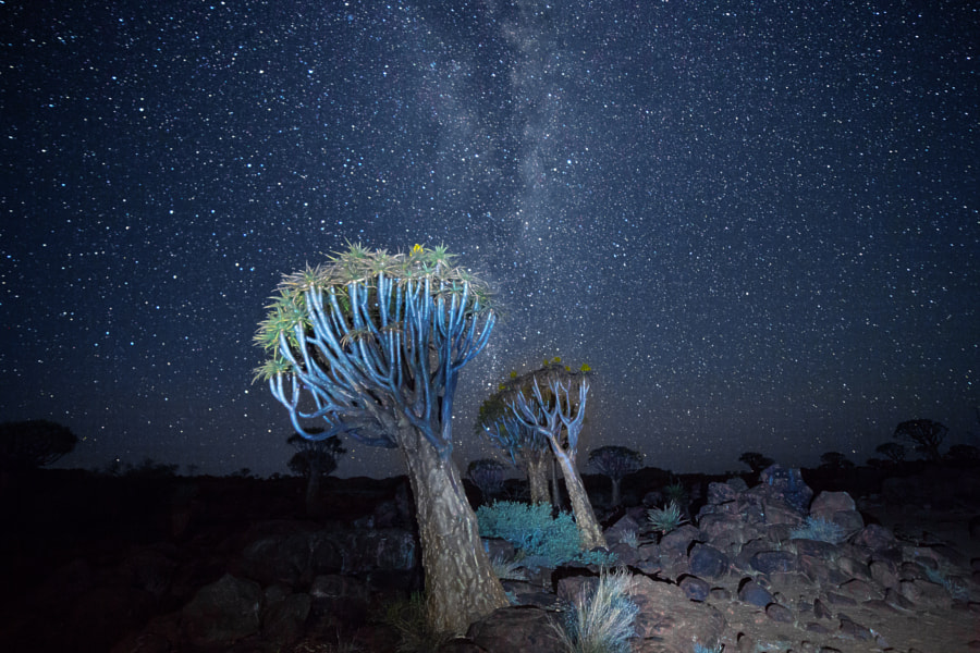 Night in Aloe Forest