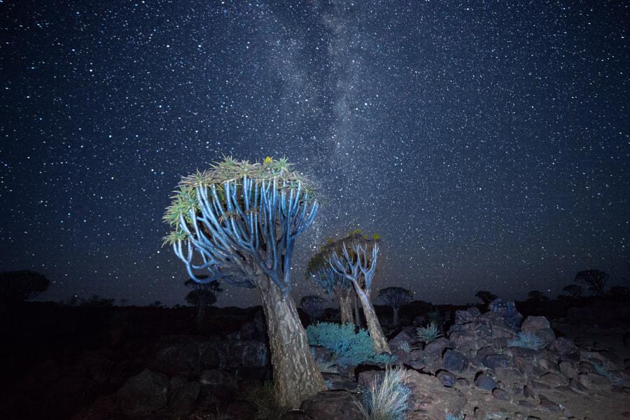Night in Aloe Forest