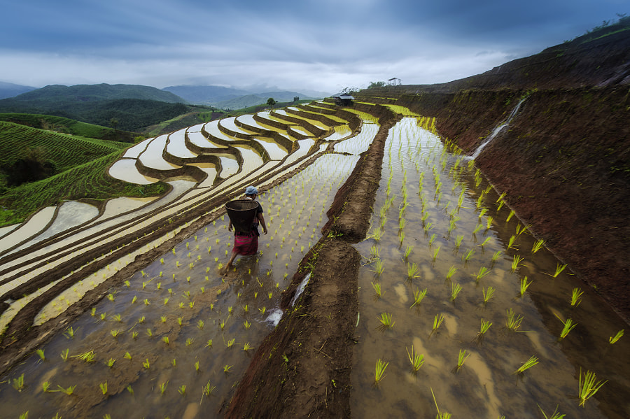 Terrace rice field in Thailand by Saravut Whanset on 500px.com