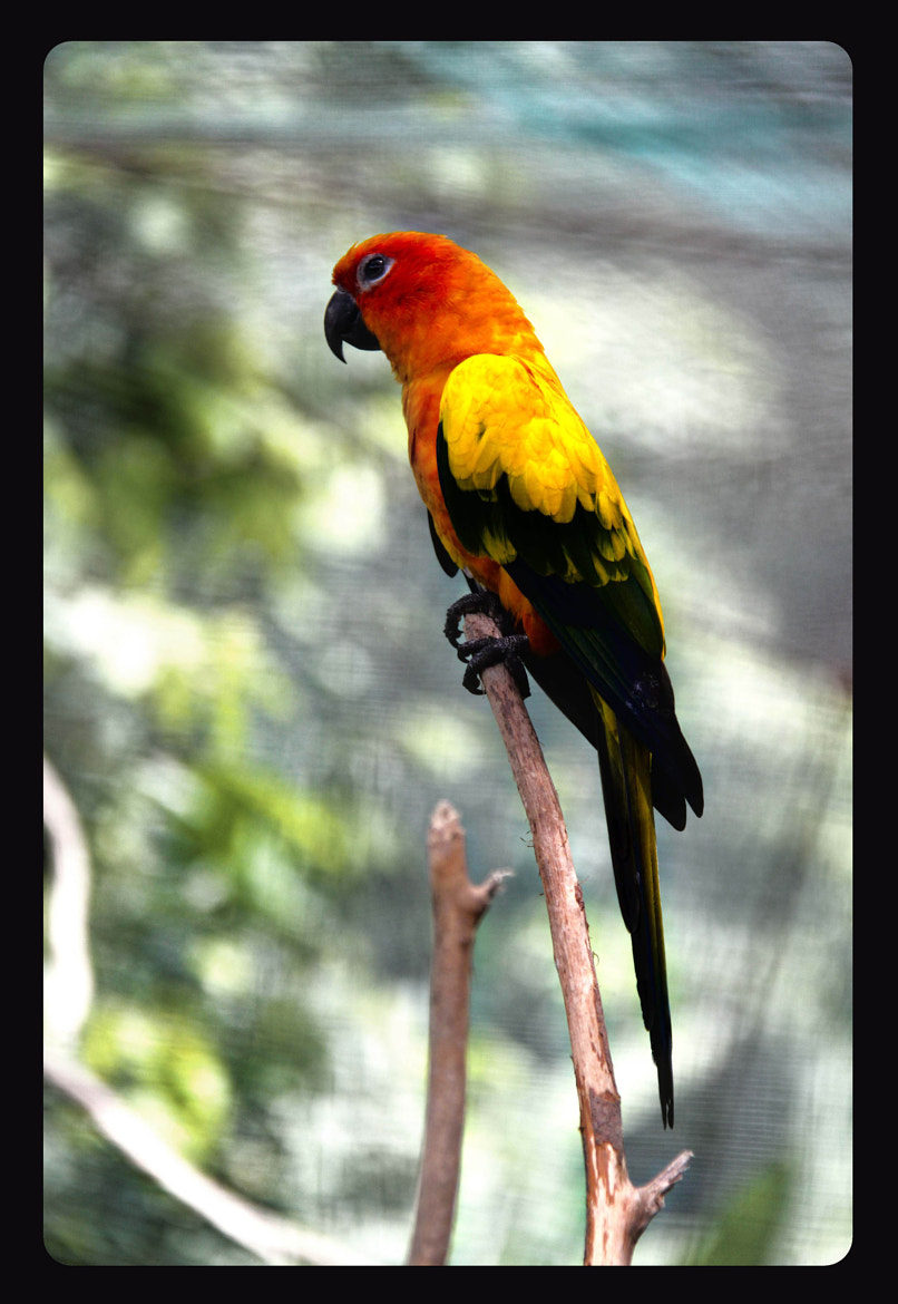 Photograph Parrot by FAZII Bah on 500px