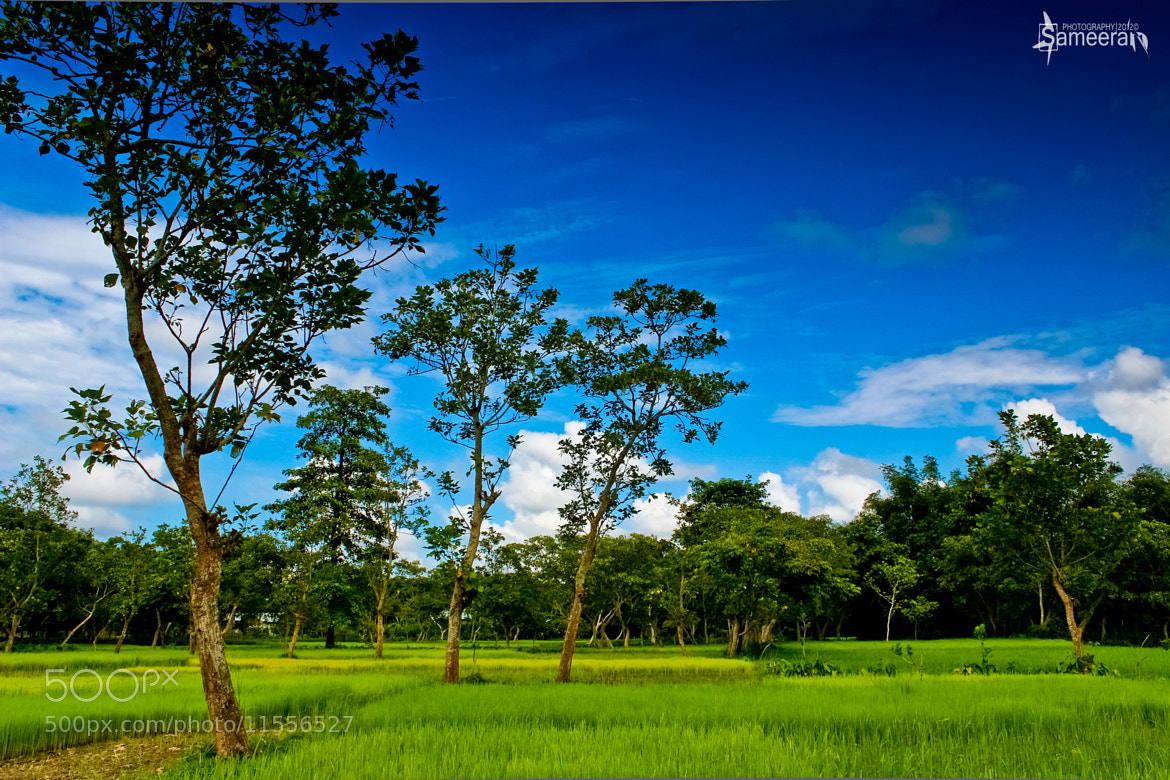 Photograph Paddy field by Sameeran Nath on 500px