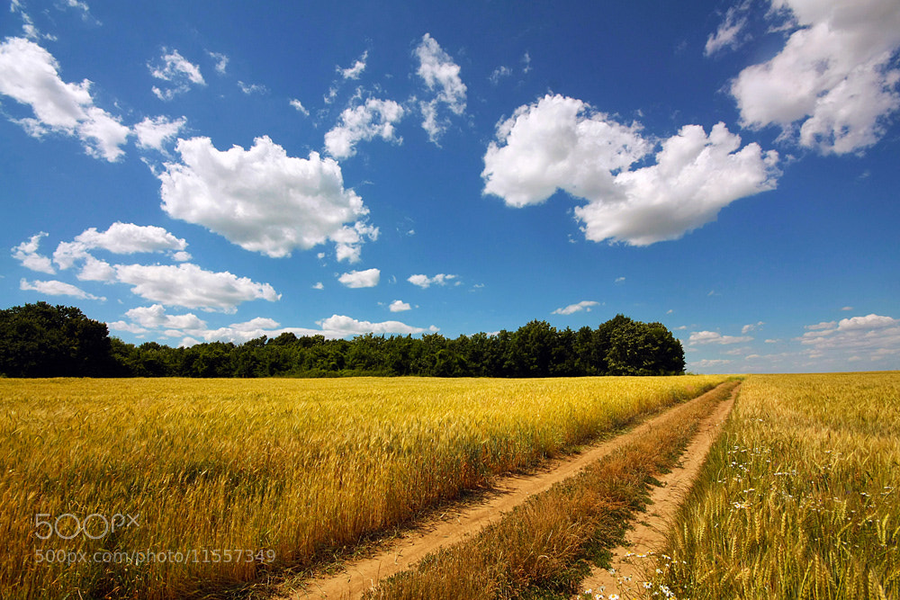 Photograph Hot summer by Stefan Andronache on 500px