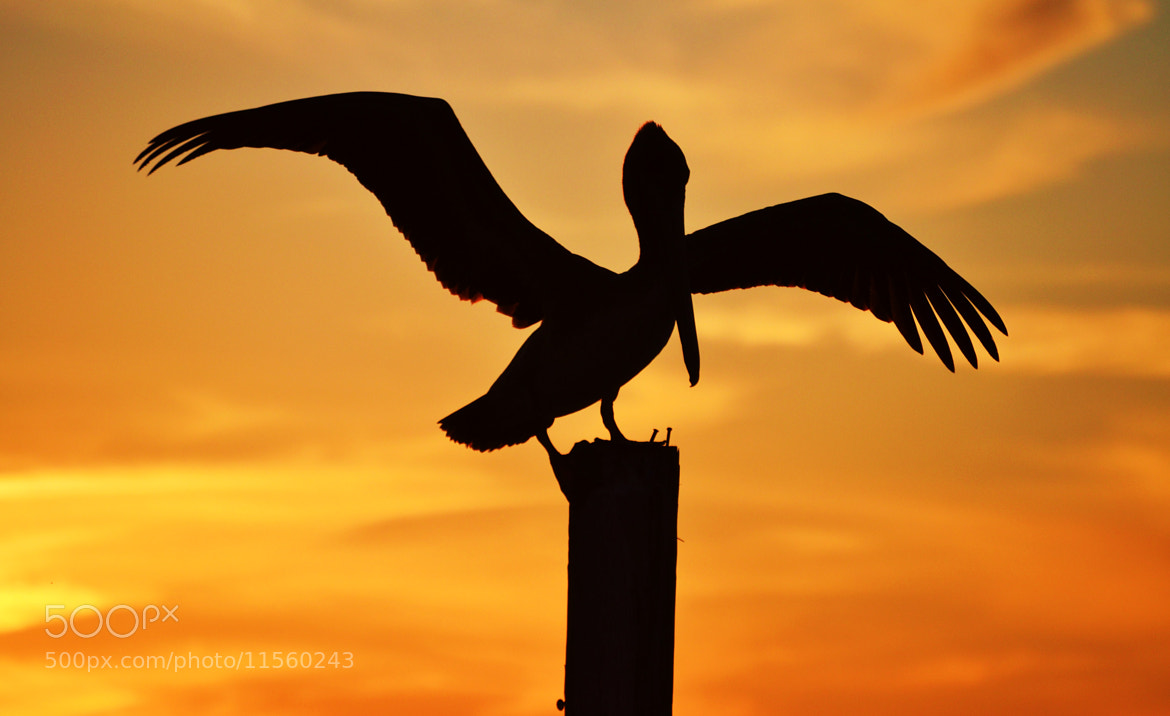 Photograph Balancing Act by Michael Fitzsimmons on 500px