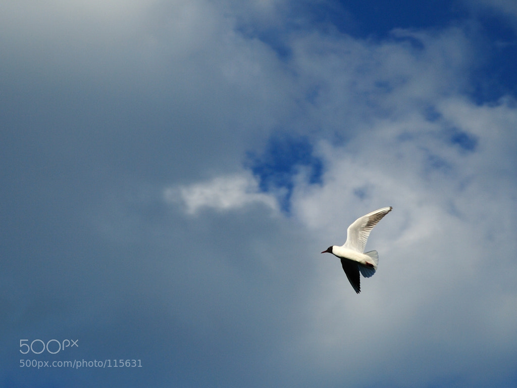 Photograph flying in the sky by woldemarr ☺ on 500px