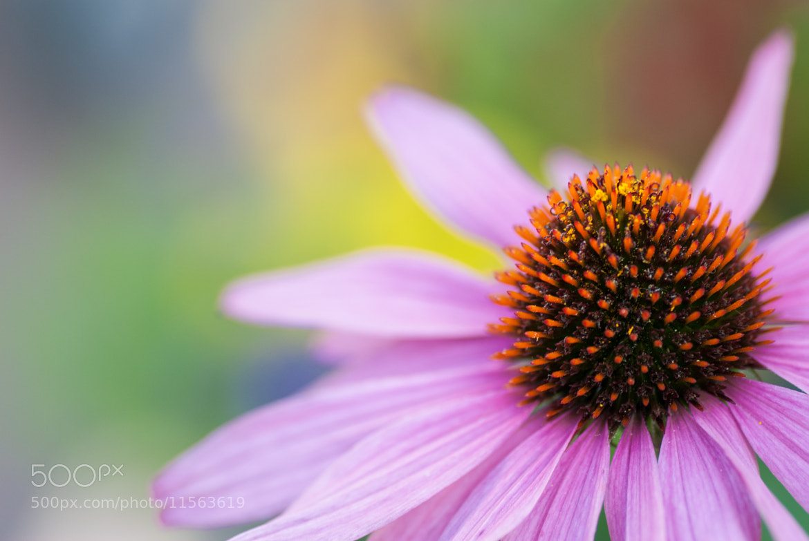 Photograph Flower in the shade by Stefan Feisthauer on 500px