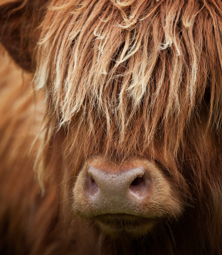 Photograph Toffee Coo by Billy Currie on 500px