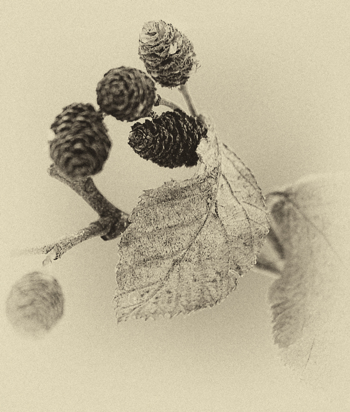 Photograph Study in Sepia by Alain Turgeon on 500px