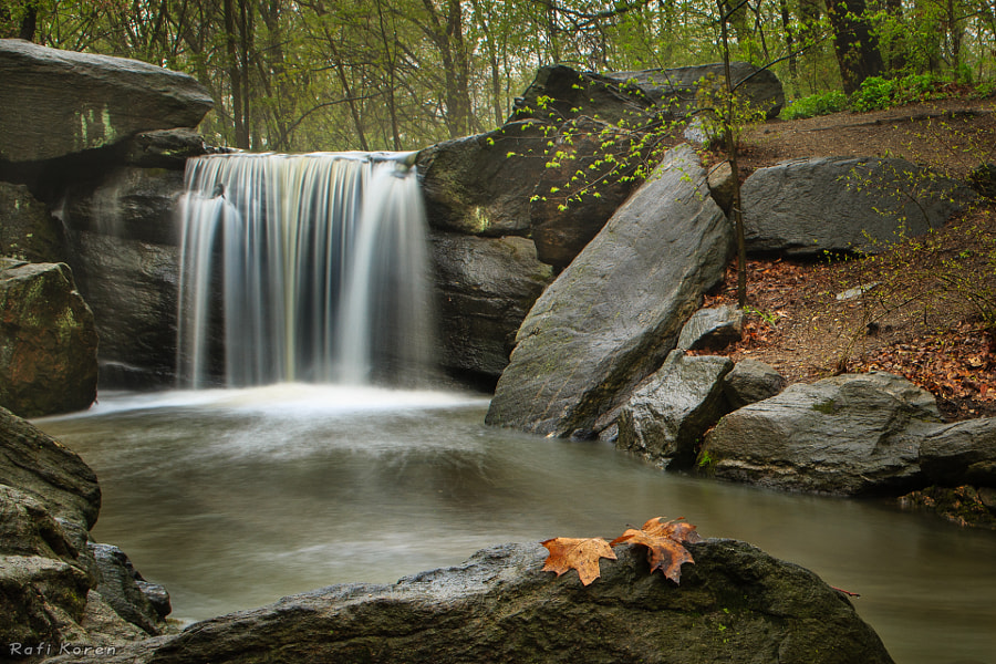 Waterfall and two leaves