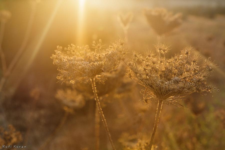 Golden Thorns