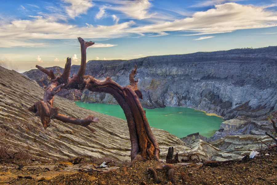 Wooden Snake of Ijen Crater by Kristianus Setyawan on 500px.com