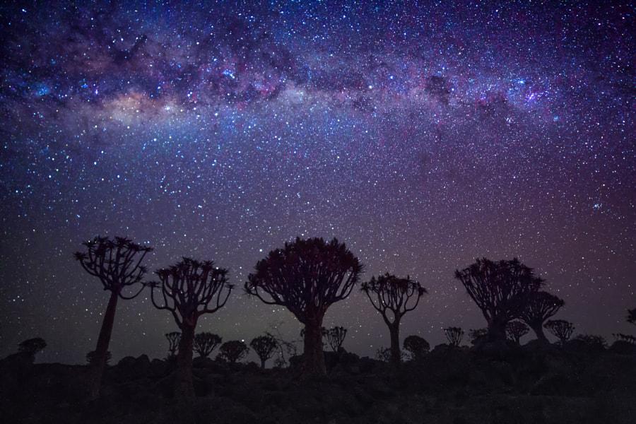 Namibian Night