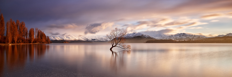 Wanaka Tree by Jake Anderson on 500px.com