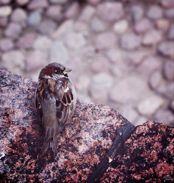 Photograph Little sparrow by Teya Saveleva on 500px